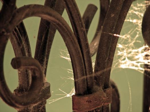 Cobwebs and Curves 2
