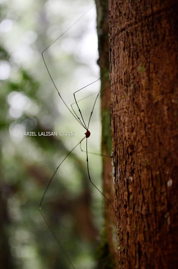 7-legged spider